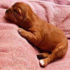 Newborn puppy on towel