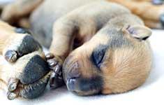 Newborn puppy by mama's feet