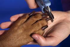 Pet nail clipping