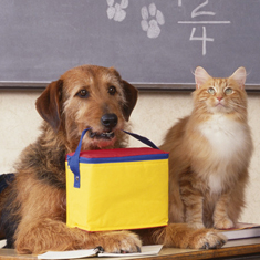 Dog and Cat in classroom