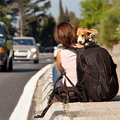 dog trips