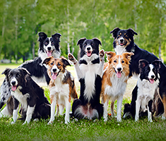 Group of Dogs at the Park