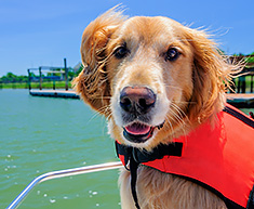Dog with water life vest
