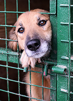 Shelter Dog Adoption Tips for Success
