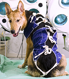 Spay and Neuter Your Dog: The Risks and The Benefits