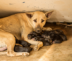 Dog outside nursing puppies in poor conditions