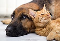 Cat laying on Dog