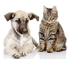 Puppy and kitten sitting