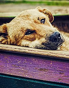 Dog laying on fence
