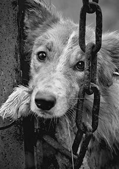 Sad dog Looking through a fence