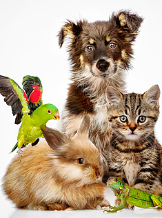 Group of animals posed together- dog, cat, parrot, rabbit