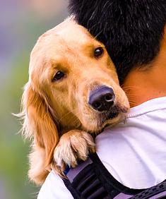 Dog cuddling on man's shoulder