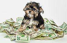 Dog sitting in a pile of cash bills