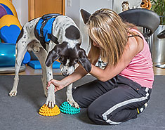 Female therapist working with exercise equipment with dog