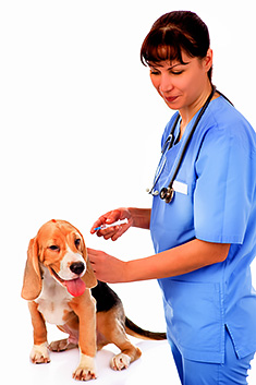 Young puppy with veterinarian