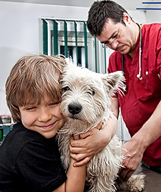 Young dog with boy and vet