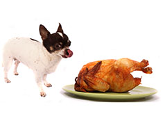 Dog licking lips next to turkey