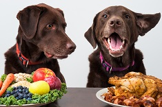 Dogs with options of vegetables or meat products for food diet