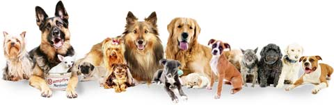 Dog Breeds: Information, Photos and Advice